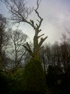 A Tree sectional dismantle 1