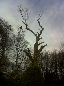 A Tree sectional dismantle 2