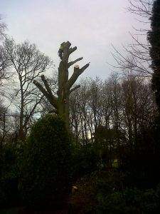 A Tree sectional dismantle 4