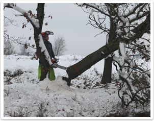 forestry public liability insurance